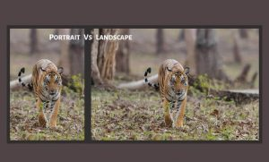 Portrait Of Landscape Photography: What You Can Do With This Photography Style