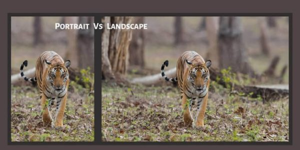 Difference Between Portrait and Landscape Photography